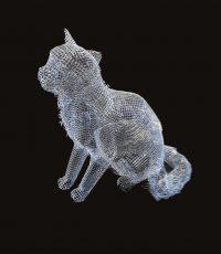gatto-liparesi