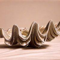tridacna-pellanda